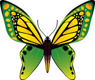 蝴蝶向量 免版税库存图片