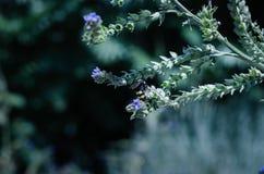 蝴蝶和昆虫从野生野花收集甜花蜜 大选择聚焦 库存照片