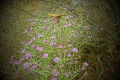 蝴蝶和花 免版税图库摄影