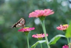 蝴蝶和花 库存照片