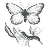 蝴蝶图画墨水向量 库存照片