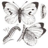 蝴蝶图画墨水向量 免版税库存图片