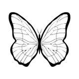蝴蝶图表签字 库存例证