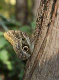 蝴蝶在一个热带森林里 库存照片