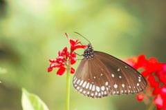 蝴蝶在从Nature'的红色花;s世界 免版税图库摄影