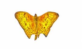蝴蝶在公园 免版税库存图片