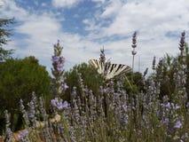 蝴蝶在国家 免版税库存图片