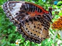 蝴蝶在它的栖所 库存图片