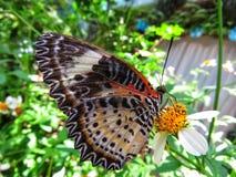 蝴蝶在它的栖所 库存照片