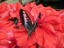 蝴蝶在它的栖所 免版税库存图片