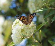 蝴蝶在庭院里 免版税图库摄影