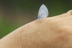 蝴蝶在手边 库存照片