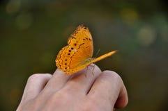蝴蝶在手边 免版税图库摄影