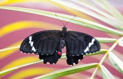 蝴蝶在生动的庭院里 库存图片