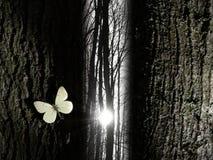 蝴蝶在精神结构树附近的空白光 免版税库存照片