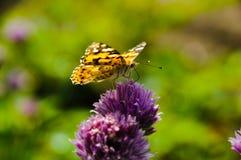 蝴蝶在花园里 库存图片