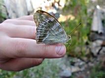 蝴蝶坐他的胳膊,并且不飞行  免版税库存图片