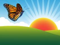 蝴蝶天空夏天 库存照片