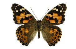 蝴蝶夫人绘了 免版税图库摄影