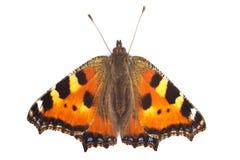 蝴蝶小的龟甲 免版税库存照片