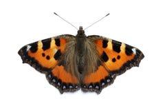 蝴蝶小的龟甲 免版税图库摄影