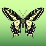蝴蝶巨人 免版税图库摄影
