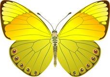 蝴蝶幻想黄色 库存图片