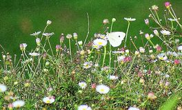 蝴蝶庭院 库存照片