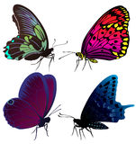 蝴蝶彩色组纹身花刺 图库摄影