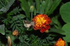 蝴蝶慢慢地登陆了在花上 免版税库存图片