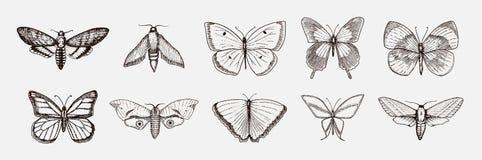 蝴蝶或野生飞蛾昆虫的汇集 神秘标志或昆虫学自由 被刻记的手拉的葡萄酒 向量例证