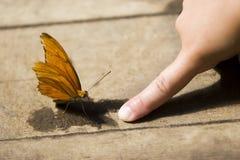 蝴蝶接触 库存图片