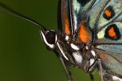 蝴蝶接近  免版税库存图片