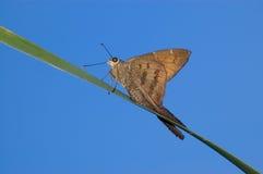 蝴蝶接近  库存图片