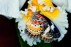 蝴蝶提供的夫人绘了 库存照片