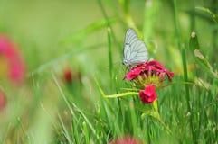 蝴蝶提供的花 库存图片