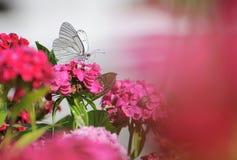 蝴蝶提供的花 图库摄影