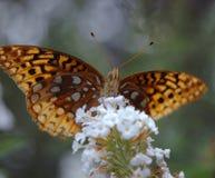 蝴蝶提供 免版税库存照片