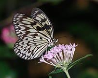 蝴蝶效应 库存图片