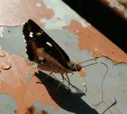 蝴蝶昆虫在夏天 免版税库存照片
