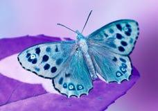 蝴蝶有斑点的木头 库存照片