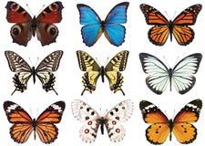蝴蝶查出白色 向量例证