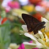 蝴蝶查出的多色白色 库存图片