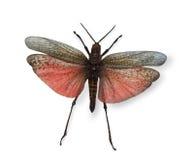 蝴蝶查出的热带白色 库存照片