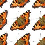 蝴蝶模式 免版税库存图片