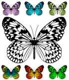 蝴蝶模板向量 库存图片