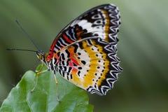 蝴蝶橙红 库存照片