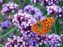 蝴蝶淡紫色 库存图片