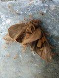 蝴蝶由蚂蚁侵略了 免版税库存图片