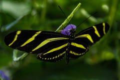 蝴蝶的微妙的接触 免版税库存图片